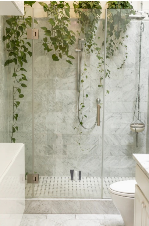 invest in houseplants that are bathroom friendly